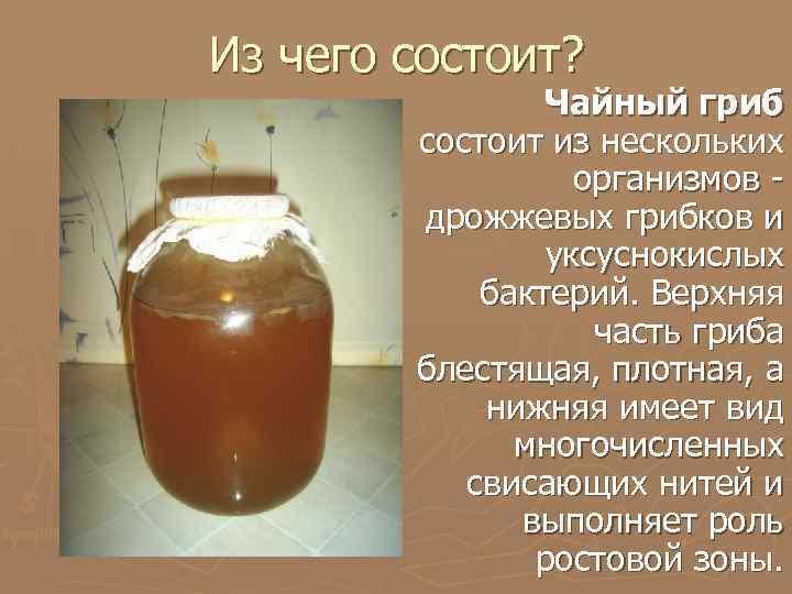 Чайный гриб: полезные свойства и особенности употребления
