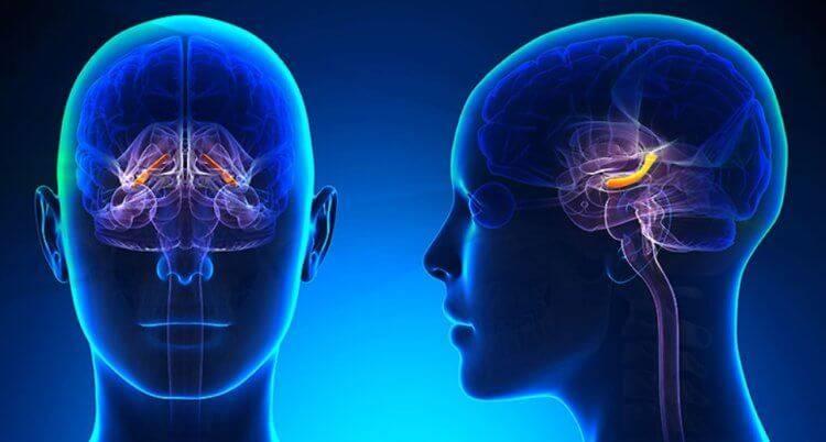 Стрессы и стрессовые состояния. причины, стадии, что происходит в организме, позитивные и негативные последствия, методы борьбы и повышения стрессоустойчивости