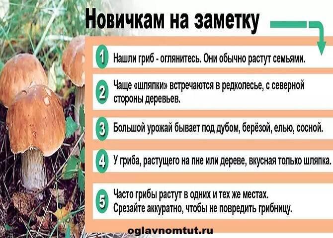 ✅ грибы в желудке перевариваются - akrobatika-sevastopol.ru