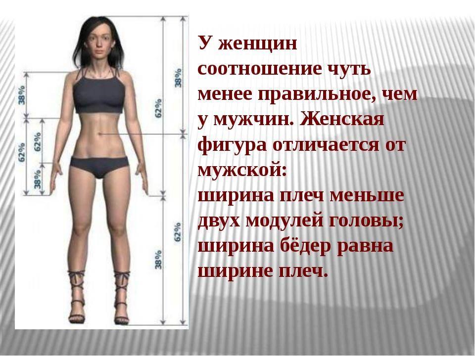Идеальные пропорции тела мужчины — таблица!