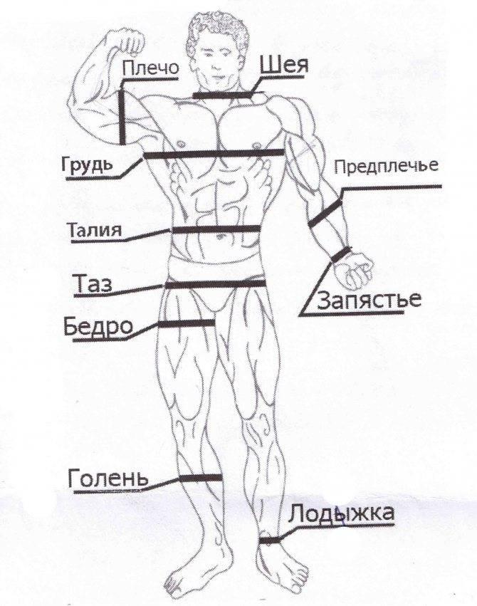 Антропометрия и пропорции в бодибилдинге. замеры тела, контроль достижений и все такое. | азбука тела