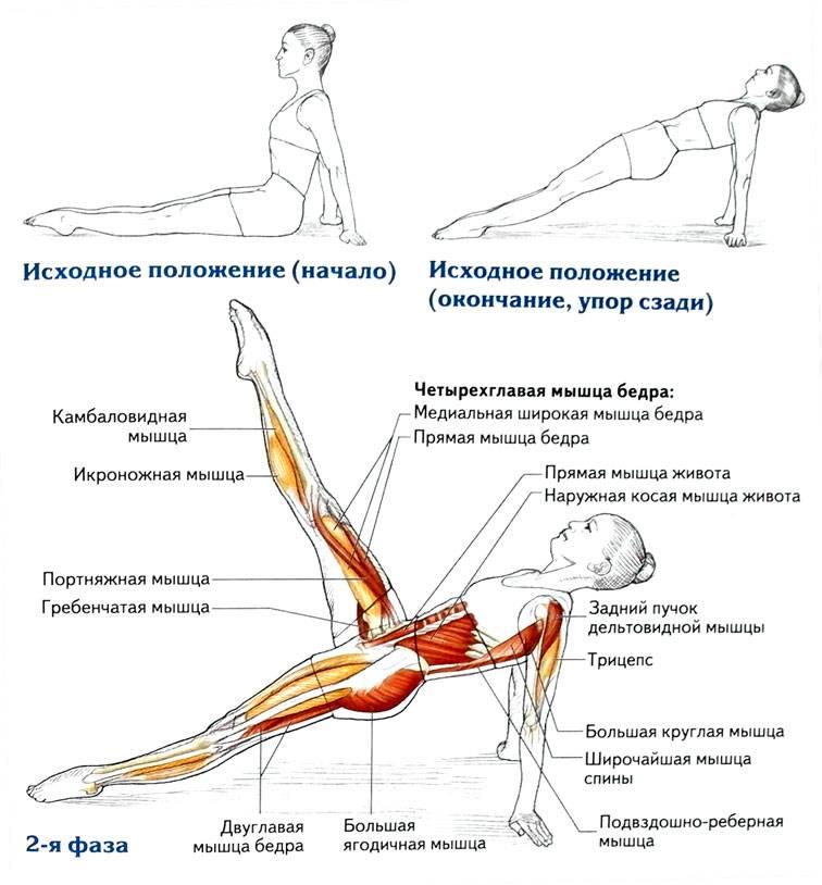 Как делать упражнение велосипед для укрепления мышц живота, описание