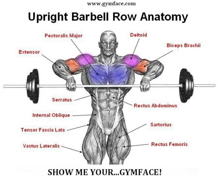 Как правильно подтягивать гантели к подбородку для тренировки трапеций и дельтовидных мышц?
