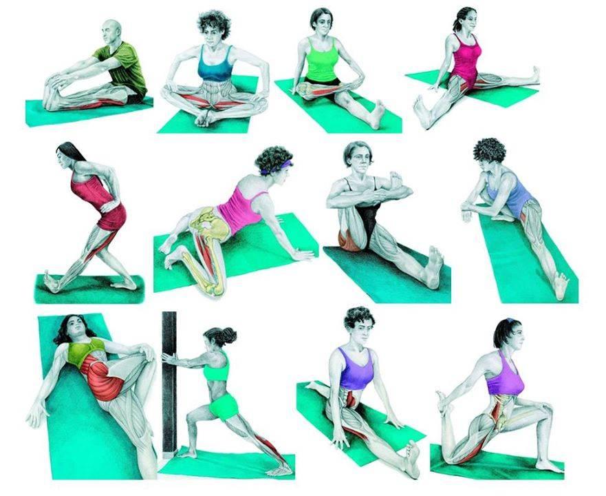 Разминка перед растяжкой: как разогреть мышцы всего тела для безопасного стретчинга