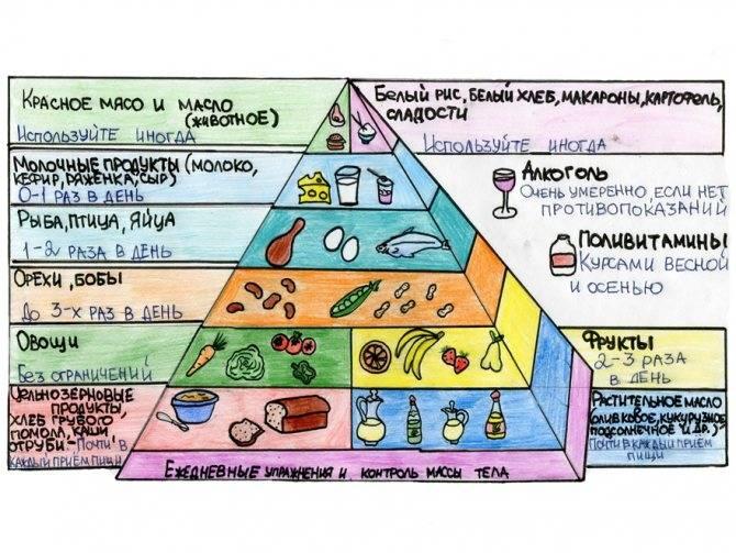 Пирамида питания – цели и рекомендации ученых по здоровому питанию | | gastrogid.ru