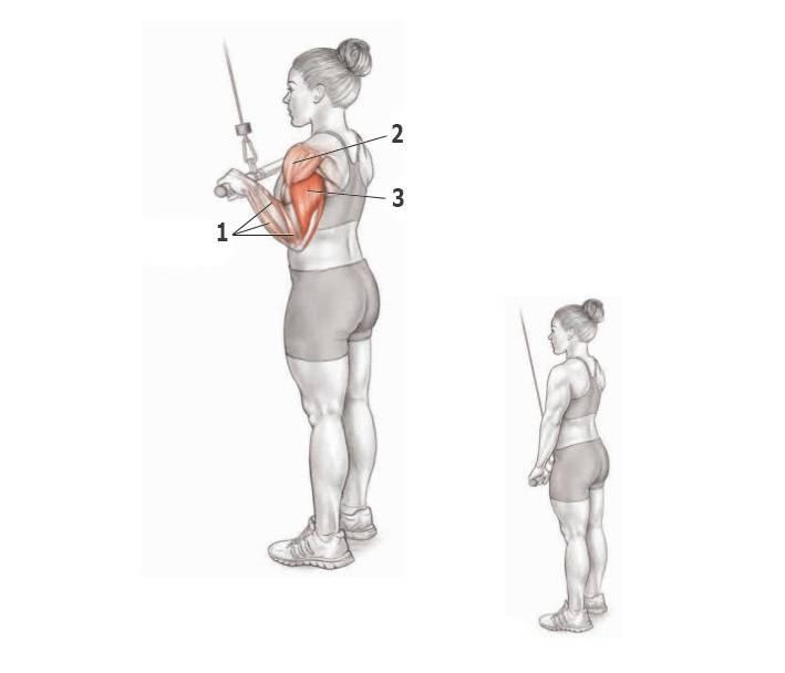 Разгибание рук в кроссовере стоя, с верхнего блока на трицепс: техника выполнения