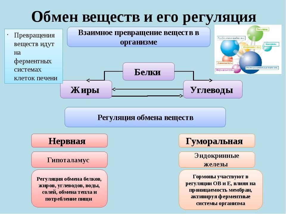 Обмен веществ: запускаем метаболизм легко и быстро - dietology.pro