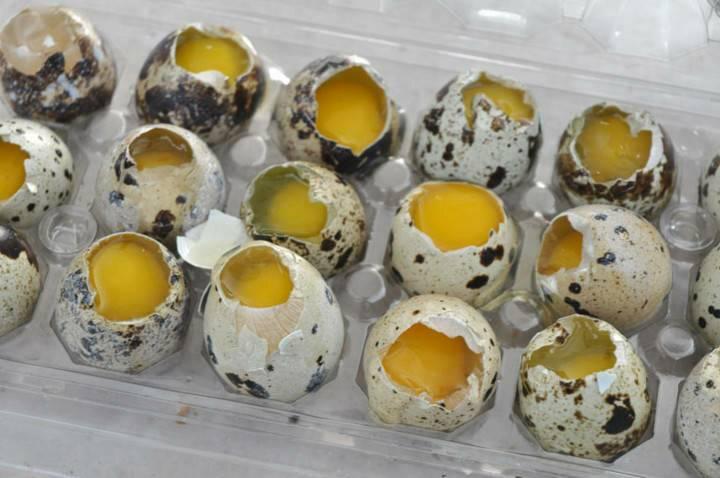 Яичный желток: калорийность, польза и вред   food and health