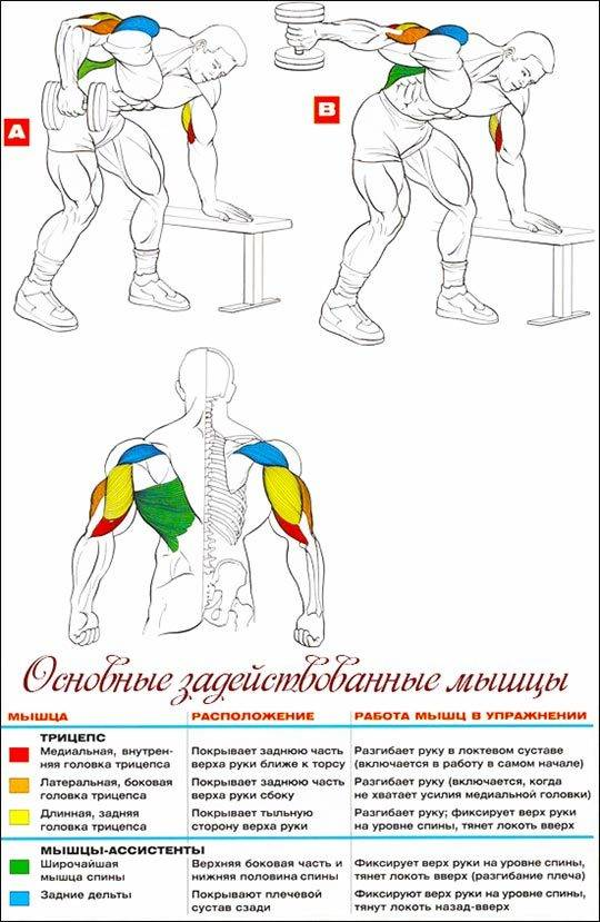 Упражнения на трицепс с гантелями: лучшие нагрузки (разгибание рук, жим), как правильно качать, эффективные тренировки для прокачки мускулов плеча