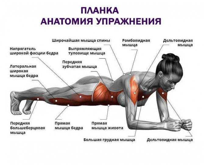 Упражнение планка, как правильно делать и сколько подходов