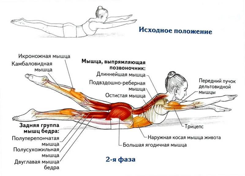 Как укреплять мышцы спины   позвоночник.org