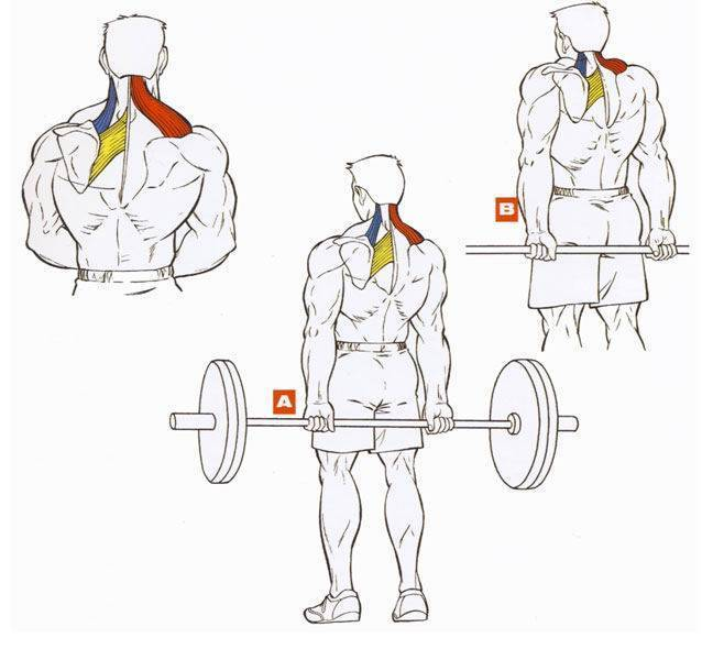 Лучшие упражнения на трапецию: выбор самого эффективного тренинга - trainingbody