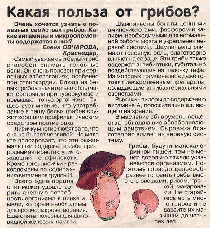Как перевариваются грибы - женский журнал