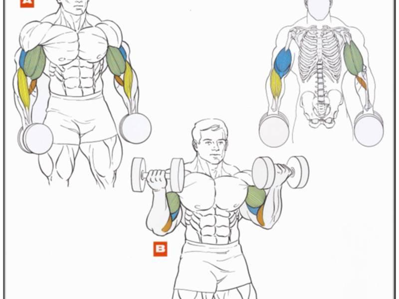 Как убрать жир с рук: 5 упражнений без гантелей