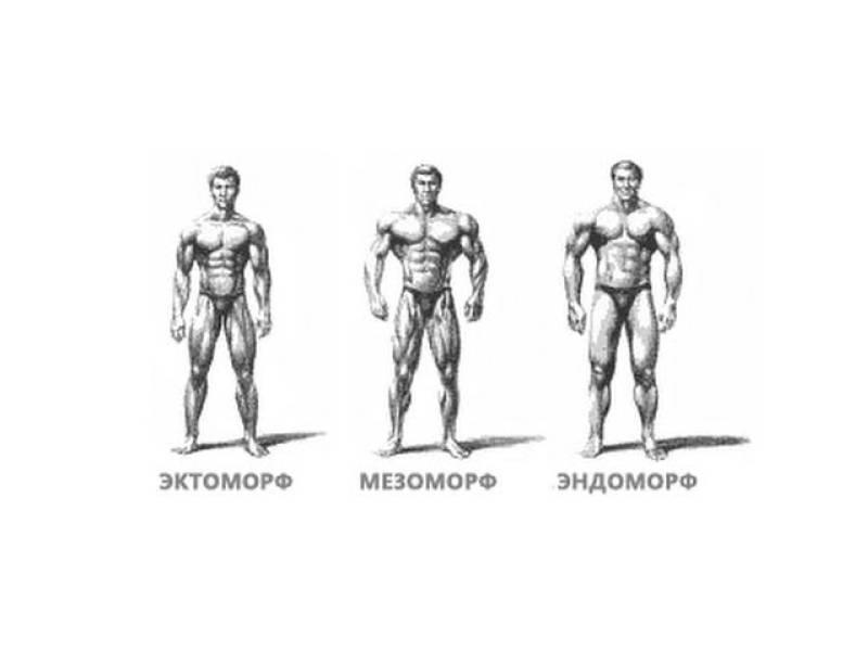 Эндоморф, эктоморф или мезоморф - как определить?