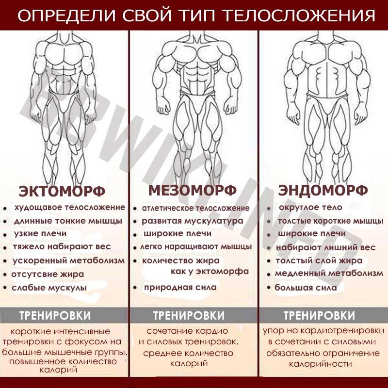 Эндоморф: кто это такой, программа тренировок и питание