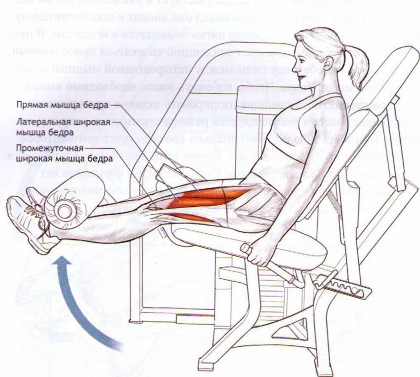 Разгибание ног сидя в тренажере: техника упражнения и варианты замены