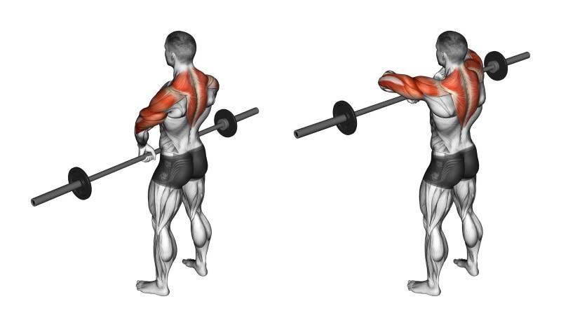 Как накачать широкую спину: эффективные упражнения + программы тренировок в видео уроках