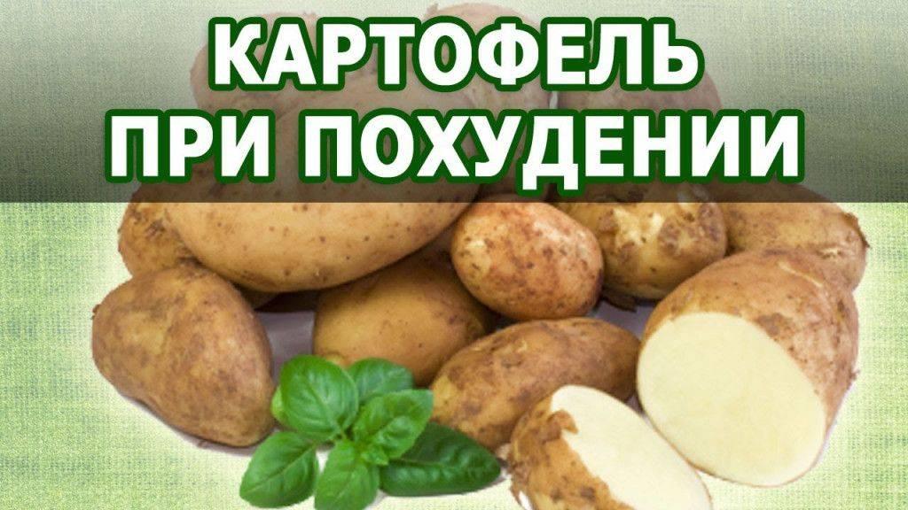 Картофель варёный в мундире — содержание углеводов