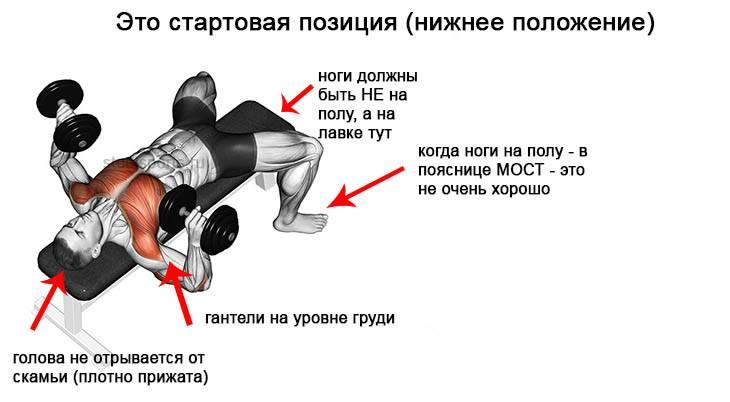 Жим гантелей в наклоне: правильная техника выполнения на массу лежа, сидя и стоя
