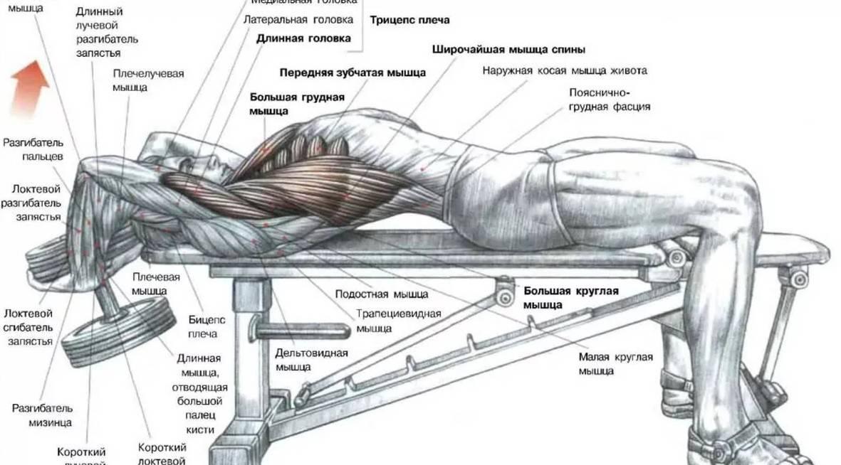 Как накачать широчайшие мышцы спины – o sporte