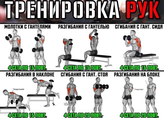 Какие мышцы качать вместе— главные принципы