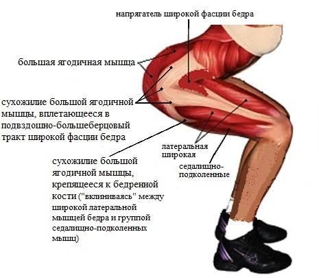 Приводящая мышца бедра на фото, упражнения для малого таза