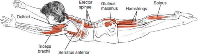 """Как правильно делать упражнение ласточка. рассказывает мастер спорта по художественной гимнастике юлия ситникова. какая польза от """"ласточки"""""""