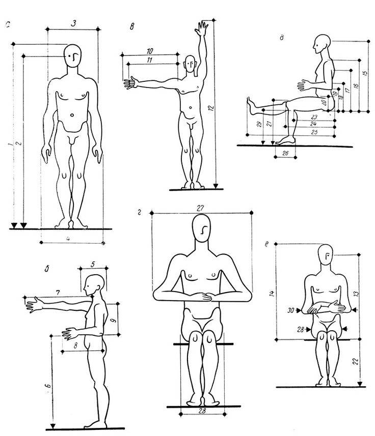 Периодизация в бодибилдинге. методы и циклы | musclefit