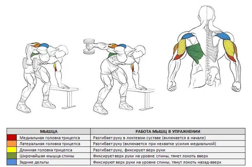 Какими упражнениями можно эффективно накачать трицепс?