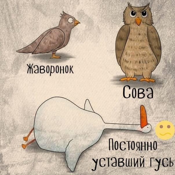 «жаворонки» и «совы»: как у них отличается уровень тестостерона — тестостерон