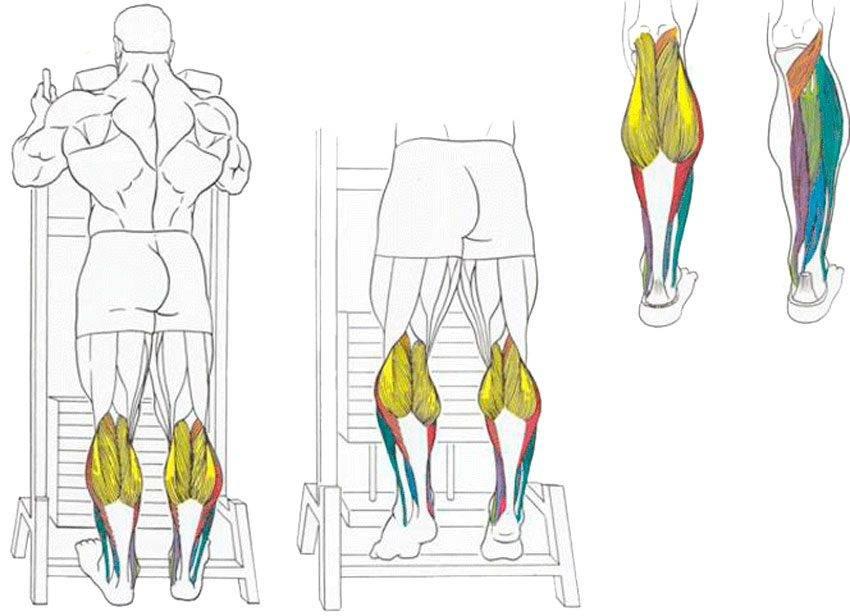 Заболевания мышц ног