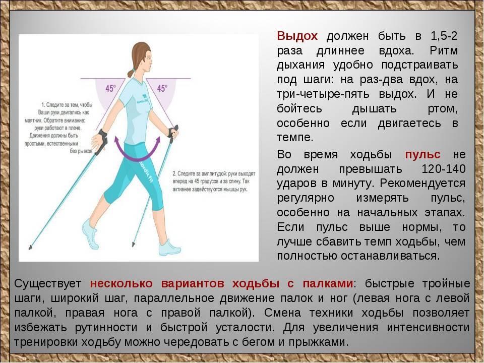 Скандинавская ходьба: как правильно ходить, держать палки, польза и минусы, противопоказания | азбука здоровья