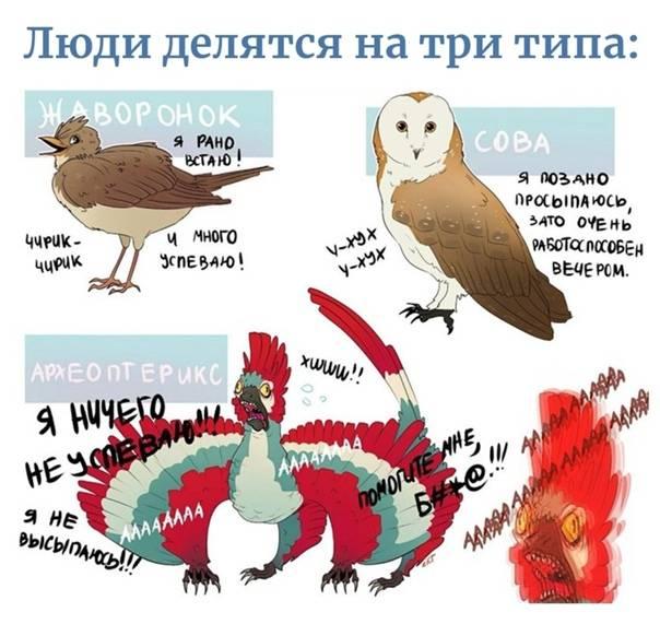 «совы» и «жаворонки»: кто здоровее — тестостерон