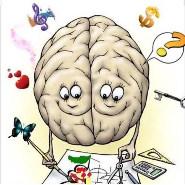 Факты и мифы о человеческом мозге