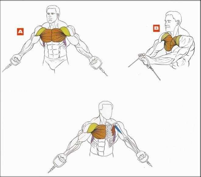 Как накачать верхнюю часть грудных мышц!