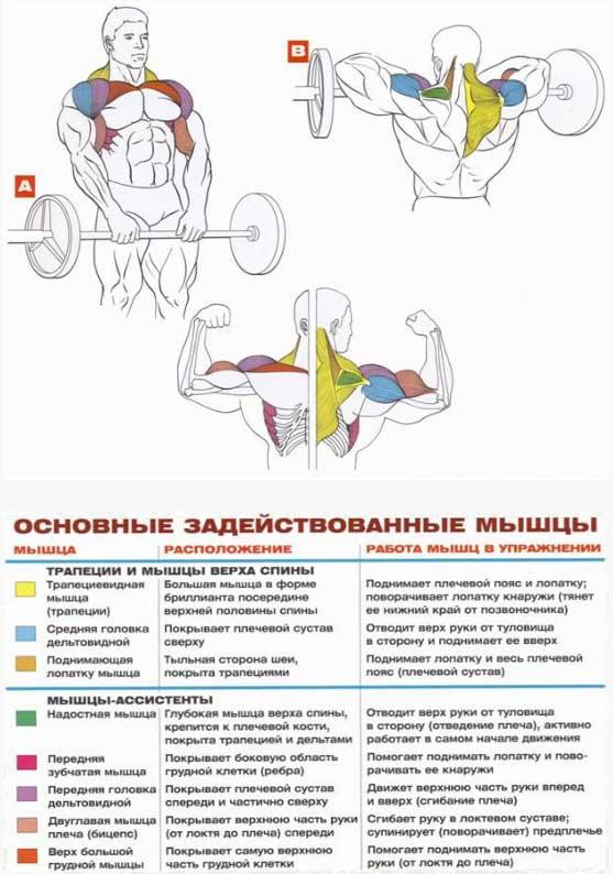 Упражнения на трапецию – sportfito — сайт о спорте и здоровом образе жизни