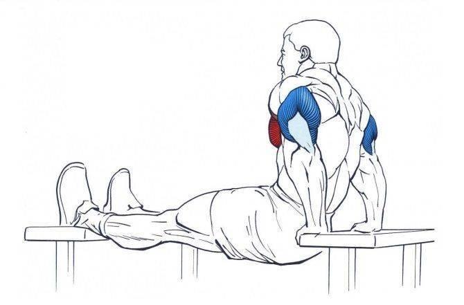 Лучшие упражнения на трицепс со штангой и гантелями