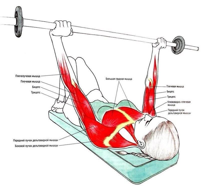 Упражнения для грудных мышц для девушек - упругое тело