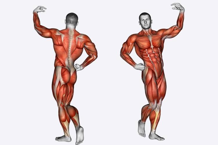 Гипертрофия мышц ☑ что это такое, какие виды бывают и как при этом тренироваться
