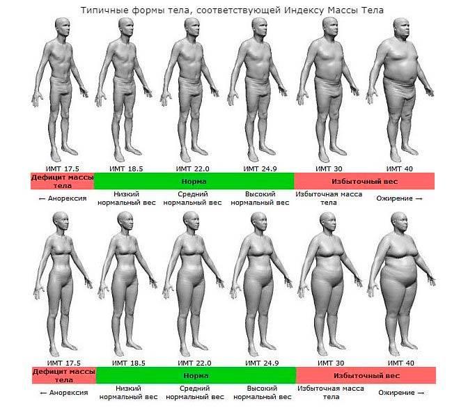 Жиры в организме человека — всё, что нужно о них знать