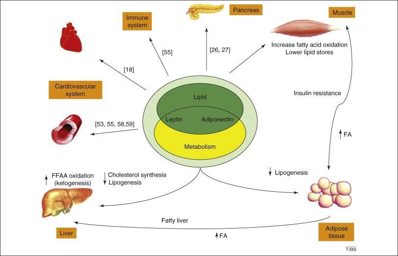 Как гормон инсулин влияет на похудение?
