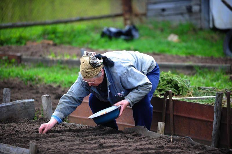 Огородные хитрости, полезные советы и секреты