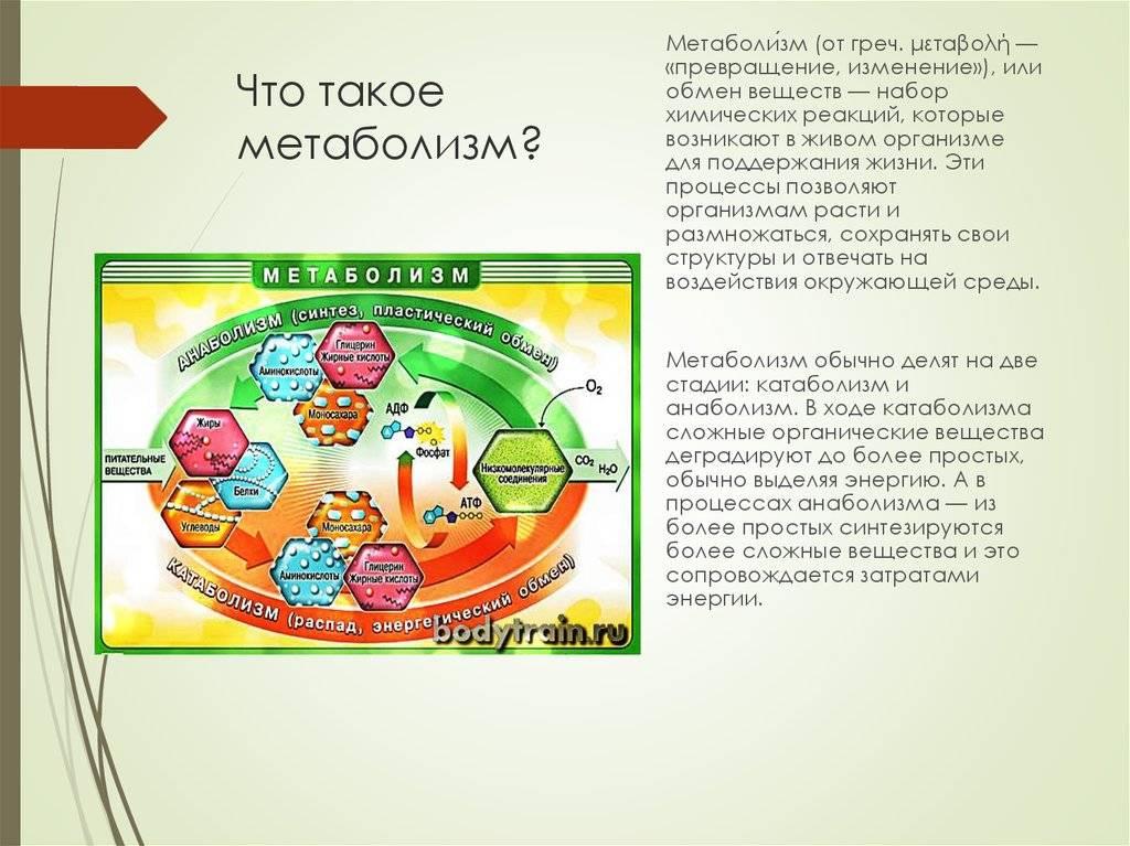 Обмен веществ в организме. как ускорить метаболизм и снизить вес.