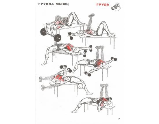 Как накачать грудные мышцы в домашних условиях?