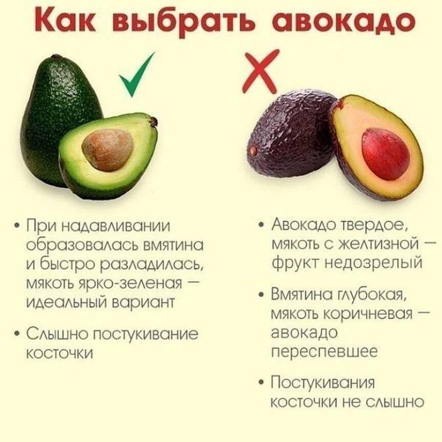 Авокадо польза и вред для организма как выбрать спелый