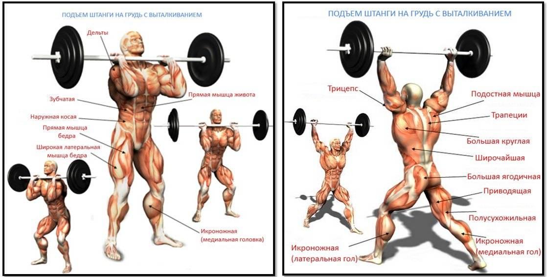 Тяга штанги к подбородку: техника выполнения, работающие мышцы и виды