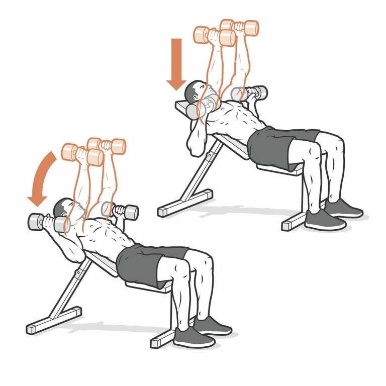 Жим гантелей на наклонной скамье: правильная техника выполнения упражнения под углом головой вверх