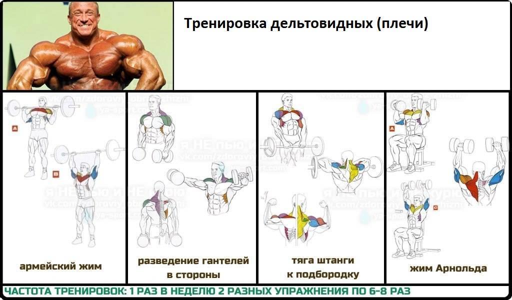 Программа тренировок на плечи в тренажерном зале. упражнения на плечи в зале