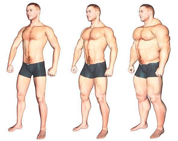 Связь телосложения с психическими особенностями, болезнями и поведением